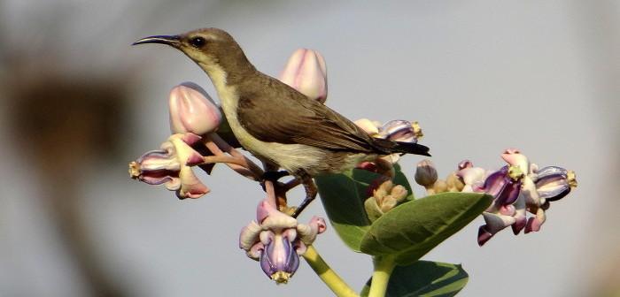 Birding in Bangalore & Beyond