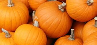 Pumpkin Made Pretty