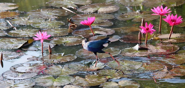 Silver Event: Bird Watching At Lalbagh