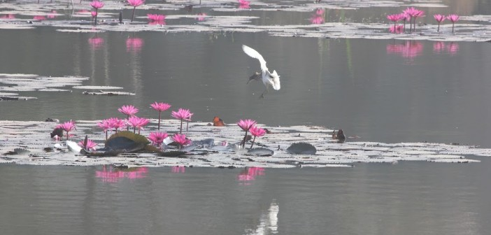 Avian Outing: Birdwatching In Lalbagh