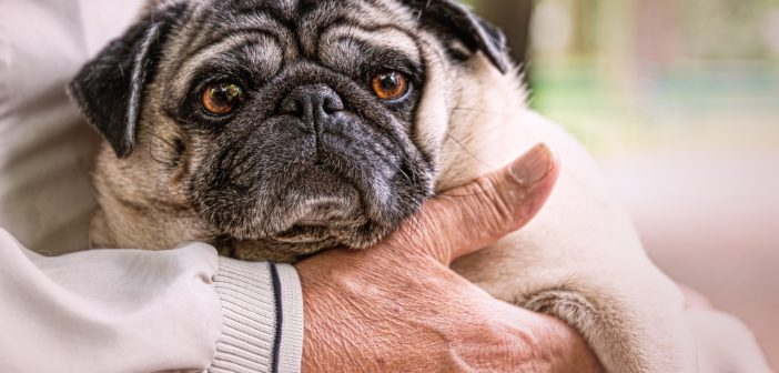 Pets For Seniors: Can They Bring A Pawsitive Change?