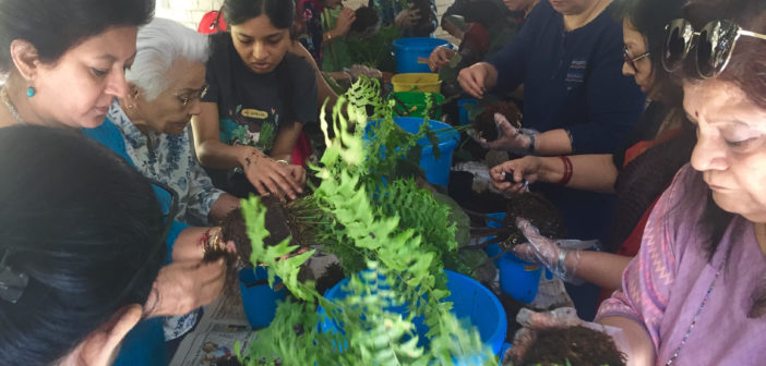 SILVER TALKIES EVENTS: KOKEDAMA WORKSHOP